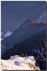 Pose au bord du monde (jamesreed68) Tags: forêt nature paysage neige hiver 68 alsace hautrhin france grandest canon eos 600d hohneck