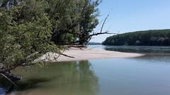 Donauauen3abJuni2017-036
