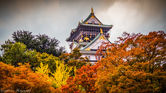The Colour of Autumn - Osaka Castle (Gerald Ow) Tags: osaka castle japan geraldow sony a7rii a7rm2 a7r2 fe 2470mm f28 gm gmaster autumn colours 日本 大阪市 大阪城 ōsakajō α7r ii ilce7rm2 autumnleafcolour