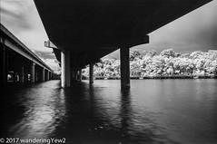 LadyBirdLake_infrared-684 (wanderingYew2 (thanks for 3M+ views!)) Tags: 120 6x9 austin austintx austintexas fuji6x9 fujigw690 ladybirdlake r72filter blackandwhite bridge film filmscan infrared infraredfilm mediumformat