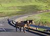 Mountain road (Hans van der Boom) Tags: holiday vacation southafrica zuidafrika sawadee maseru lesotho people road horses animal dog lso