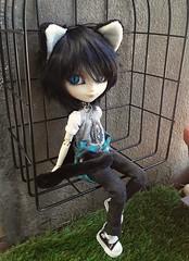 Blue cat (Lunalila1) Tags: doll groove isul jimmyx blue ears cat chips neko sen