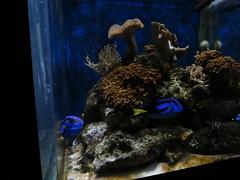 IMG_0243 (Alejandro Perez M.) Tags: medellin parqueexplora acuario