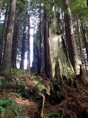 SequoiaPark032413i (homeboy63) Tags: spring 2013 humboldt sequoiapark eureka fauna