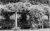 Spring-10 (FSR Photography) Tags: bielefeld bw blackandwhite blackwhite sw schwarzweis schwarzweiss canon canondslr canon400d nature natur light leaves blätter monochrome monochrom botanik bienenhaus fsr fsrphotography