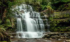 Liffey Falls (Richard Landherr) Tags: tasmania liffey waterfall