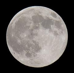 Full, 100% of The Full Buck Moon is Illuminated IMG_5274 (Ted_Roger_Karson) Tags: canon powershot sx50 hs hd tonights moon northern illinois 50x optical zoom moonwatch capture shot raw jpeg test photo telephoto thisisexcellent twop telephotos solareclipse lunartics sx lunar sky circle tonightsmoon 50xopticalzoom canonpowershotsx50hsmoonwatchmooncapturemoonshotwaxingcrescentcanonpowershotsx50hsrawjpeg50xopticalzoomwaxinggibbousmoonshotcapturenorthernillinois