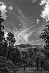 Black and white nature (Pepa Morente ( 1.800.000 de VISITAS )) Tags: black white nature naturaleza planco negro sederismo sierra montaña