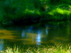 Reflection of Abstract Art (caren (Thanks for 2.0 Mio+ views)) Tags: reflection wilderness rural welshcountryside westwales cymru nature abstractnature blurry