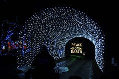 18 Light Tunnel (megatti) Tags: buckscounty christmas christmaslights pa pennsylvania shadybrookfarm tunnel yardley