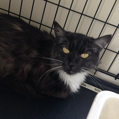 Duchess - 1 year old spayed female