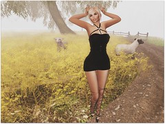 They're sheeps ...ok, I'm a bunny (Moni Carissa) Tags: whimberly fitmeshdesignerexpose anastyle dress harness 7deadlyskins farrah oaktone maitreya bentohead lelutka appliers omega boots blond magikahair free reelposes bunny groupgift