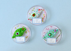 Euglena brooches (hine) Tags: euglena plankton microbe biology felt feltsculpture fibreart handmade hinemizushima softsculpture plush brooch exhibition art craft ranbu 標本の王国 水島ひね 微生物 プランクトン