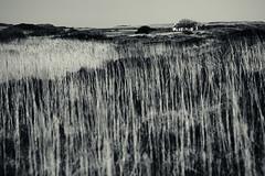 Isolation - Ross of Mull (Alan Frost ARPS) Tags: ardtun isleofmull rossofmull scotland alanfrost cottage grasses isolation monochrome splittone bunessan unitedkingdom