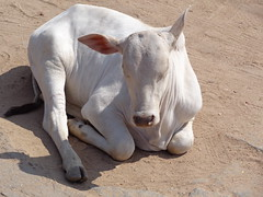 DSC01023 (kpsiddharth) Tags: hampi karnataka india krishnadevaraya vijayanagaraempire tungabhadrariver kishkindha ramayana