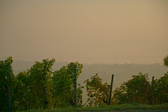 DSC01899 (ES_789) Tags: sony a6000 herbst herbstfarben remstal morgen nebel