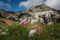 _DSC6269-2 (Nadja E.) Tags: achensee gemeindeebenamachensee tirol österreich at berg blume