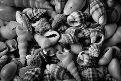 beachcombing (Patrick JC) Tags: macromondays relaxation shells small beachcombing bw mono