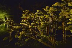 Dans la lumière ... (ptit fauve) Tags: parcorientaldemaulévrier france 49 parc parcoriental arbre arbuste nature oriental lumière éclairage nuit poselongue couleur parcjaponnais nikon nikond800 maineetloire night reflet maulévrier conte contesjaponnais