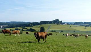 2017 Germany // Westerwaldwanderweg 5 // Blick nach Weltersburg