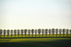 line of trees (Neal J.Wilson) Tags: trees tree nature landscapes fields green shadows nikon nordic denmark d3200 danishlandscapes danish jutland jylland scandinavia