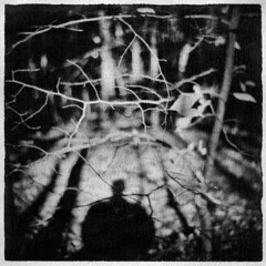 The ghosts that haunt me (LowerDarnley) Tags: holga inktransfer aluminum woods selfshadow morningwalk trees ghosts branches