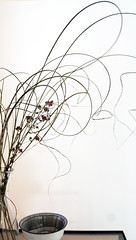 pretty (Rosmarie Voegtli) Tags: odc plant light curves swirls leaves curls movement dynamic athome bowl design stilllife pretty ourdailychallenge highkey
