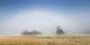 de zeldzame mistboog was vanmorgen te zien ins ons mooie Drenthe - Foto: Karin Broekhuijsen (RTV Drenthe - foto's) Tags: 20170618 drenthe elperstroom elperstroomgebied geoparkdehondsrug unescoglobalgeopark bomen boog boom breedbeeld buitengebied dageraad grassen halo juni landschap mist mistboog natuurgebied natuurverschijnsel nederland optischfenomeen optischverschijnsel panoramafoto panoramisch ruraal weersverschijnsel witteregenboog zeldzaam zomer zonsopgang zonsopkomst