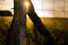June (--Conrad-N--) Tags: fence flickr friday sony a7rm2 light low sunset za zeiss zaun