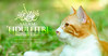 'Eid Mubarok 1438   Salam 'Aidilfitri 2017 (AnNamir™ c[_]) Tags: namir annamir kucing tucing cats kitten animals pets houseofcat nikon d300s sigma 200mm eidmubarak aidilfitri eidulfitri salamaidilfitri salamsyawal salamlebaran maafzahirbatin kualalipis kualakubu malaysia islam hariraya selamathariraya aidilfitri2017 aidilfitri2018