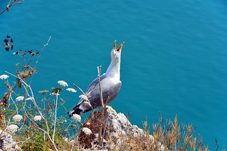 Seagull on the saa