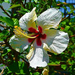 Beauty of a summer day! (Edale614) Tags: flower nature northcarolina biltmore