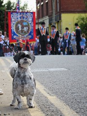Twelfth of July, 2017 (Bessy Bumblebee) Tags: cullybackey coantrim northernireland uk twelfth july summer marching season orange order orangemen orangeism orangeorder dog