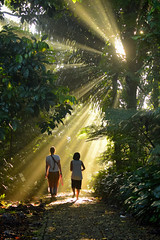 Morning Light in the Java Jungle (MrCrisp) Tags: sunlight adis bogor friends jungle sun play aerobie green indonesia