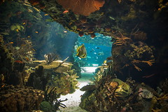 Oceanario de Lisboa  (Explore Jun-28-2017) (José M. Arboleda) Tags: oceanario agua pez ave acuático marino lisboa portugal eos markiv greatphotographers josémarboledac ef24105mmf4lisusm canon 5d