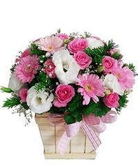 Một số cách chọn hoa chúc mừng năm mới đẹp và sang trọng (hoaflower102) Tags: cách chọn hoa chúc mừng năm mới