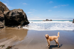 Wet Dog (DEARTH !) Tags: california beach muirbeach bayarea chase ocean wetdog marincounty dearth northerncalifornia roadtrip pacific dog