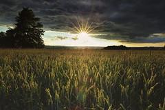 dryField (tobias-eger) Tags: landscape field sun sunset blackforest clouds sky horizon nature canon light landschaft feld sonne sonnenuntergang wolken himmel licht schwarzwald natur horizont