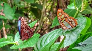 Butterfly Paradise Amazonica, Diergaarde Blijdorp, Rotterdam, Netherlands - 5077