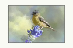 On a sunny day (Krasne oci) Tags: bird goldfinch flowers painterly summer backyardbirds texturedphoto photoart artphoto evabartos delphinium blueflower yellowbird