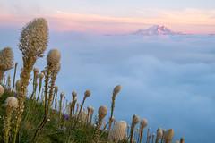 Beargrass and Tahoma (Laura Jacobsen) Tags: alpinelakeswilderness bandera banderamountain hiking i90 iraspringtrail littlebandera mountains sunset trails washington wildflowers