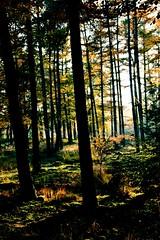 Into the Woods (barbara_donders) Tags: woud forest bos bomen trees licht schaduw shadow light sunbeams zonnestralen summer zomer green groen hout wood mos moss mooi prachtig beautifull magical