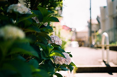 (yasu19_67) Tags: oneday sunnyday atmosphere photooftheday filmphotography analogphotography filmism minoltaα7 minoltaaf50mmf17 50mm fujifilm 業務用100 osaka japan alley street flower