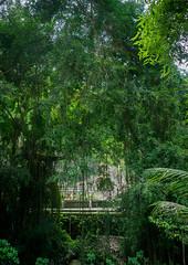 The ancient royal tombs of Gunung Kawi , Bali island, Tampaksiring, Indonesia (Eric Lafforgue) Tags: ancient architecture asia asian attraction bali bali1767 balinese candiprasadhaukir culture day destinations gunungkawi hindu hinduism historic history incidentalpeople indonesia indonesian island jungle kinganakwungsu landscape locations monument outdoors pakerisan religion religious rock royal scenery shrine spiritual tampaksiring tombs tourism tourist touristic tropics udayanadynasty vertical worship baliisland