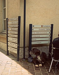 DESTINOS (dirceu1507) Tags: dogs perros cães cani frança chartres chien hund 扫街 streetphotography france