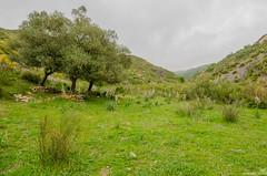 Nature (haddadzakaria) Tags: algeria cloudy erraguene jijel landscape spring water green nature