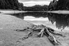 low tide (andreassimon) Tags: ottenstein spiegel waldviertel sw österreich rastenfeld niederösterreich reflection stichworte landregionort aufnahmeort