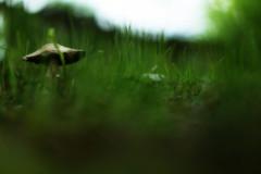 Alice in Wonderland (Mo Vidal) Tags: mushroom pilz pilze mushrooms green grün wiese garten garden