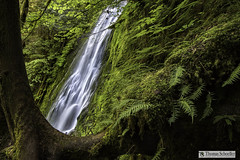 Precariously Placed at Madison Falls ~ Olympic NP (Thomas Schoeller Photography) Tags: madisonfalls washington washingtonstate olympicnationalpark elwharainforest waterfallsofthepacificnorthwest uniqueperspectives runningwater licoricefern bigleafmaple moss steepcliffs forested emeraldgreen envy naturephotography