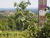 © Schilcherland Weinberg Steiermark Österreich Deutschlandsberg – Wine-Growing Wineyard South Styria Austria Europe (hn.) Tags: 2017 austria copyright copyrighted cultivation eu europa europe grapevine heiconeumeyer langegg langeggadschilcherstrase langeggadschilcherweinstrase mai may schilcherland schilcherstrase schilcherweinstrase steiermark styria südsteiermark südweststeiermark viticulture weinanbau weinanbaugebiet weinbau weinbaugebiet weinberg weinrebe weinstock wine winegrowing winegrowingregion wineyard österreich